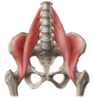 content_Iliopsoas_Muscle_Neutral