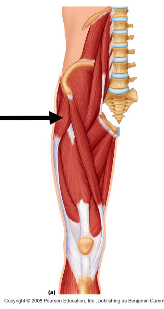 Low Back Pain In Runners In A Battle Of Muscle Supremacy Evil